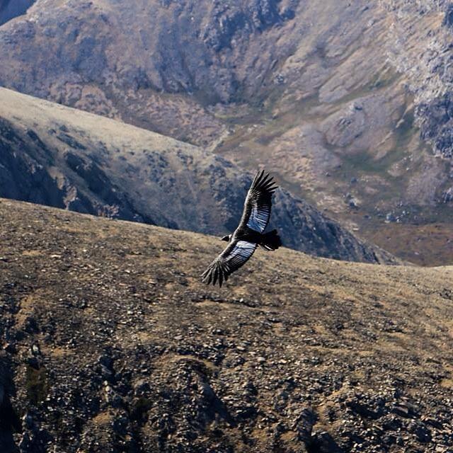 Cuando cruzábamos los cerros más altos de Península Mitre tuvimos que detenernos un par de horas a disfrutar del vuelo de 6 cóndores que planeaban sobre nuestra cabeza.
