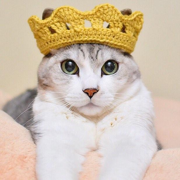 #crochet #king