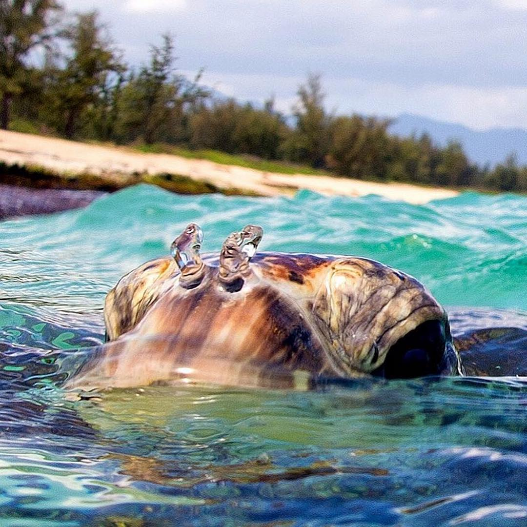 This is how we prefer our Mondays. Serene, calm, swimming with sea turtles. @clarklittle has it figured out! #H2OFloatable #Nature