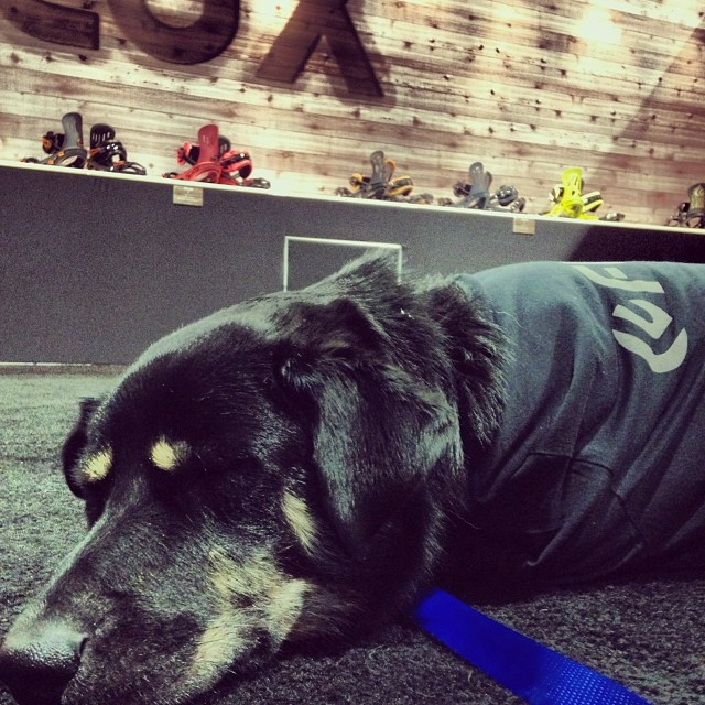 Last day of #SIA14... #ODtheOfficeDog is Flux'd. #thefluxlife