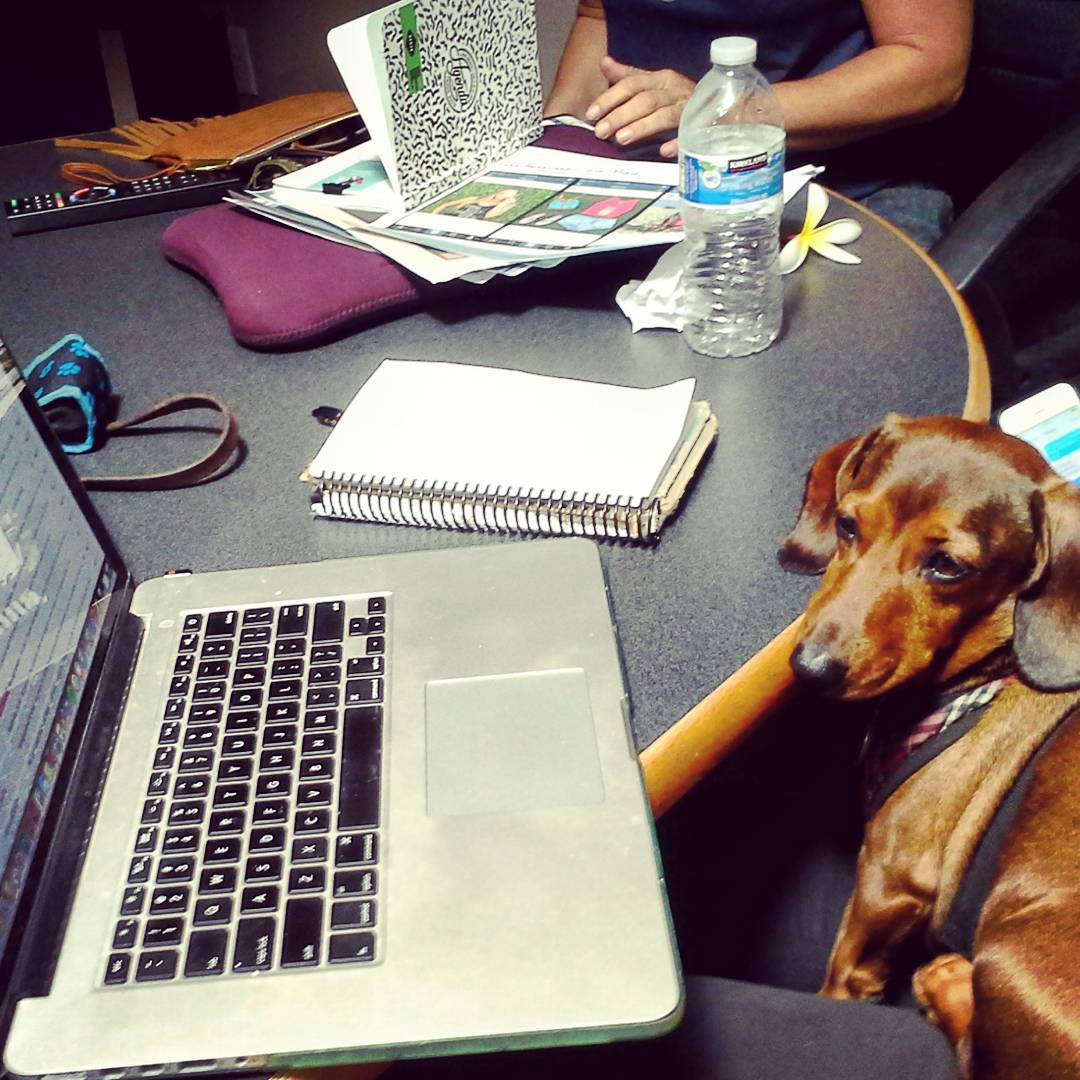 Work meetings got me like... #luvsurf #angustheweenie #wegotitboss #workinlikeadog #isitnaptimeyet #letsgoforawalk