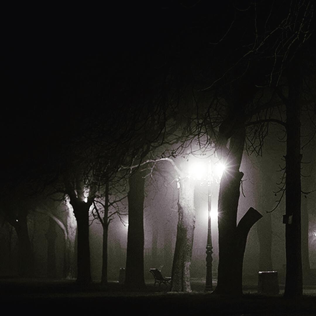 El bosque a oscuras es una locura