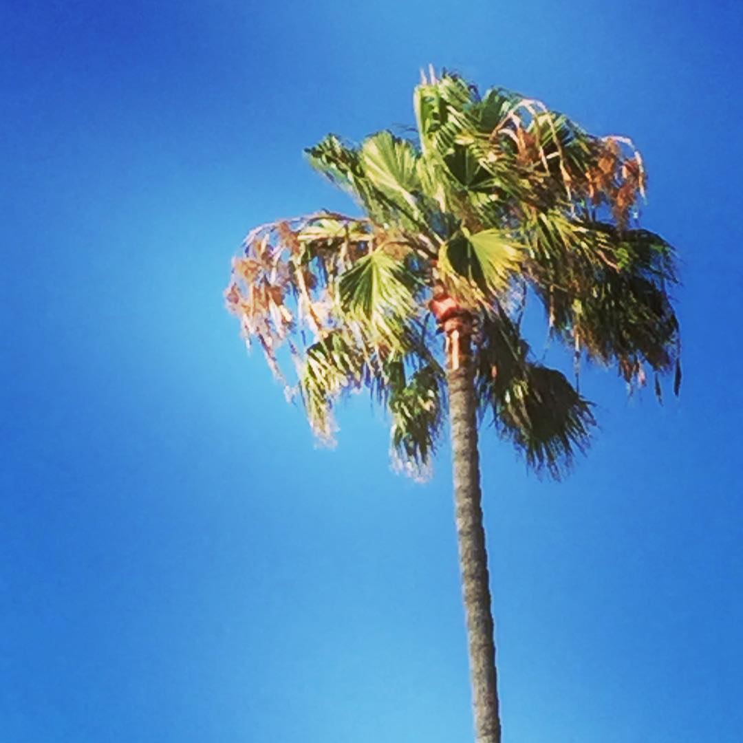 Me la llevo en mi! #aldesliz #california #oceanbeach #palm