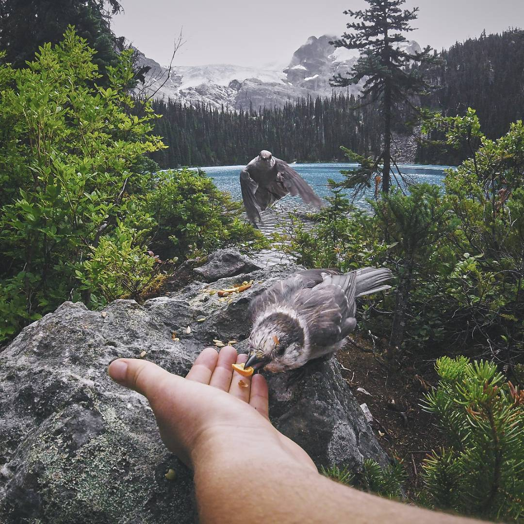 "Congratulations to @laurence_ce on winning the #DeepSummer Photo Challenge Viewers Choice Award @whistlerblackcomb! ""The wildlife and nature surrounding Whistler is just amazing. Glazier capped mountains, lagoon coloured lakes and beautiful bird life...."