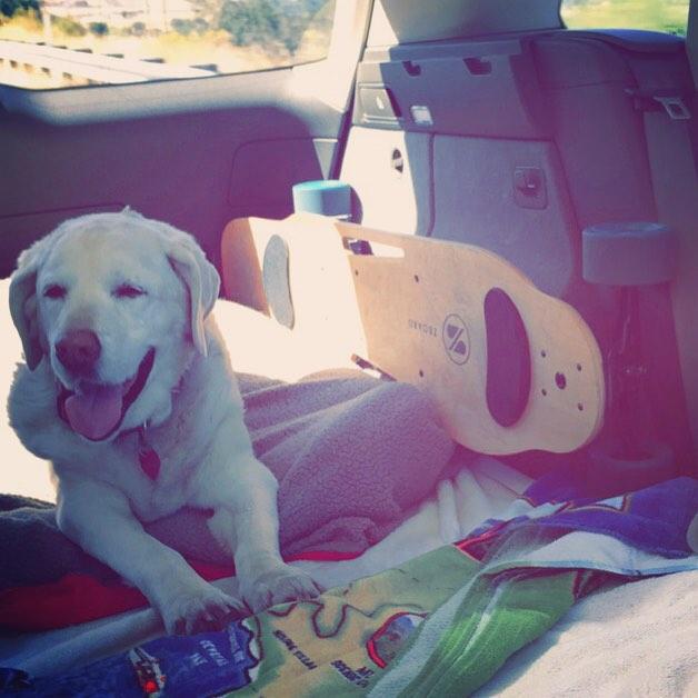 Taking the kids on a road trip! #zboard