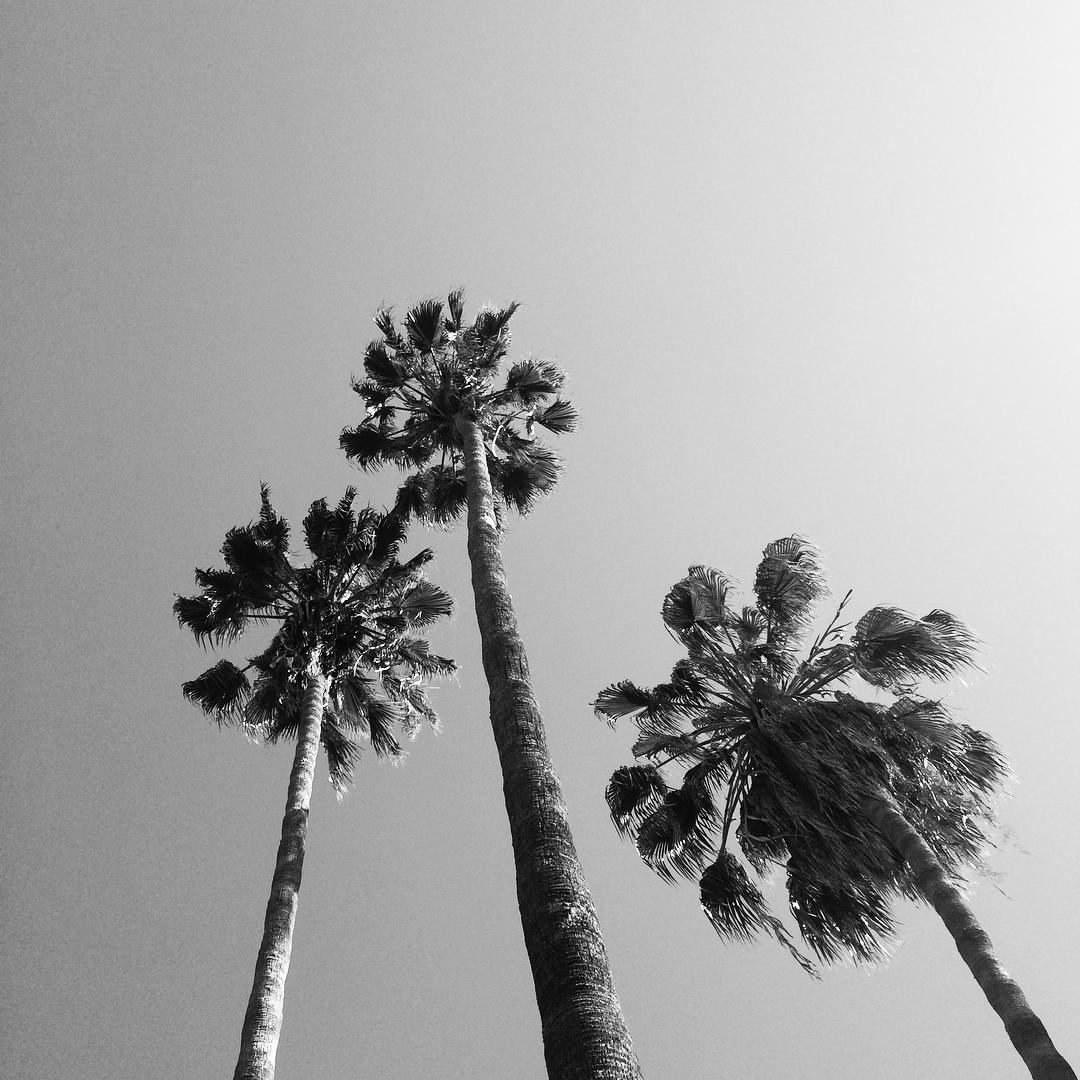 California Daze /// @billabongwomens #wandermuch #California #SanDiego #Summertime #intothesea #palmtreeskyscrapers