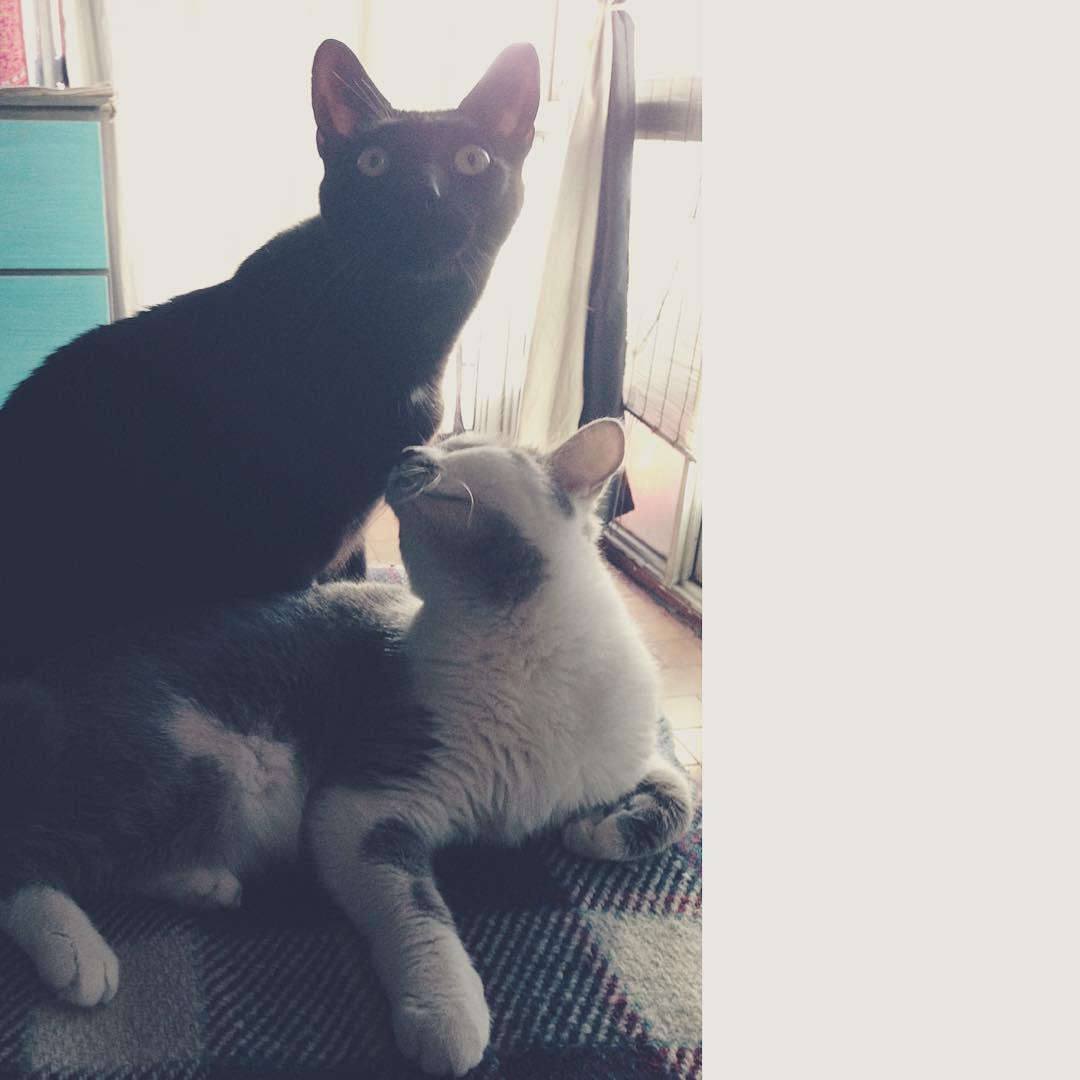 Amor gatuno @tintoysoda #amorgatuno #cat #gato #gata #amor #kitten