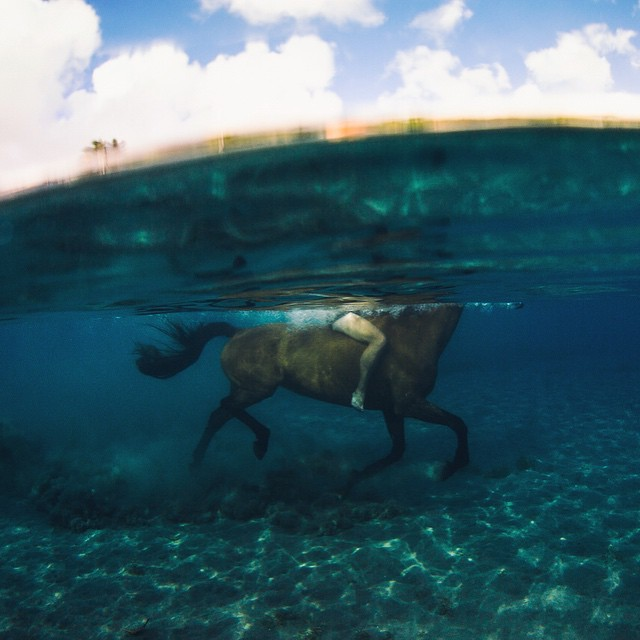 I had a dream last night that @hisarahlee and I moved back to Dominica to run an underwater horse farm...I woke up laughing...although this was one of the most incredible experiences of my life, I don't know if running an aquatic equestrian ranch is...