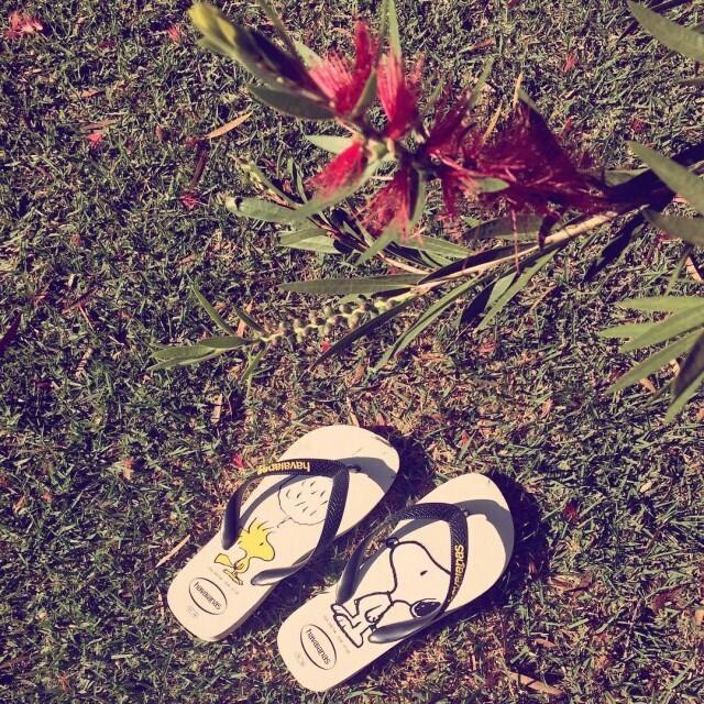 #sigaoverao #followthesummer #sigaelverano #nature @chinelaria.oliveira