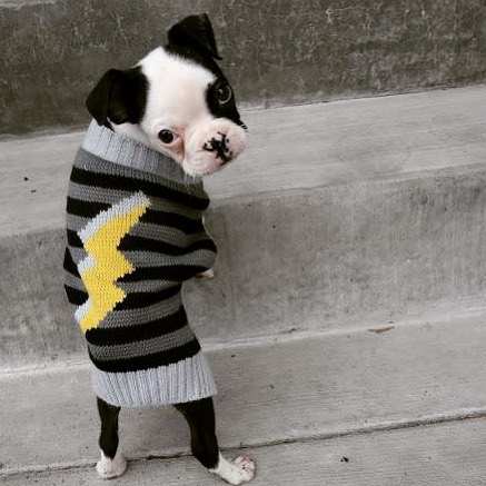 Que opinan? ⚡️⚡️ -  #dog #knit #fashion