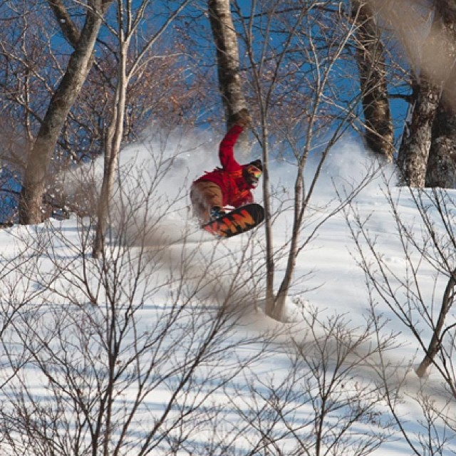 Pow tree lines in Japan .... @rakejose421 can ride it all.