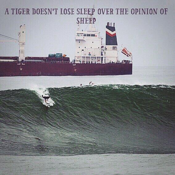 @mpasseri1 en Chile - Un tigre no pierde el sueño por la opinión de una oveja