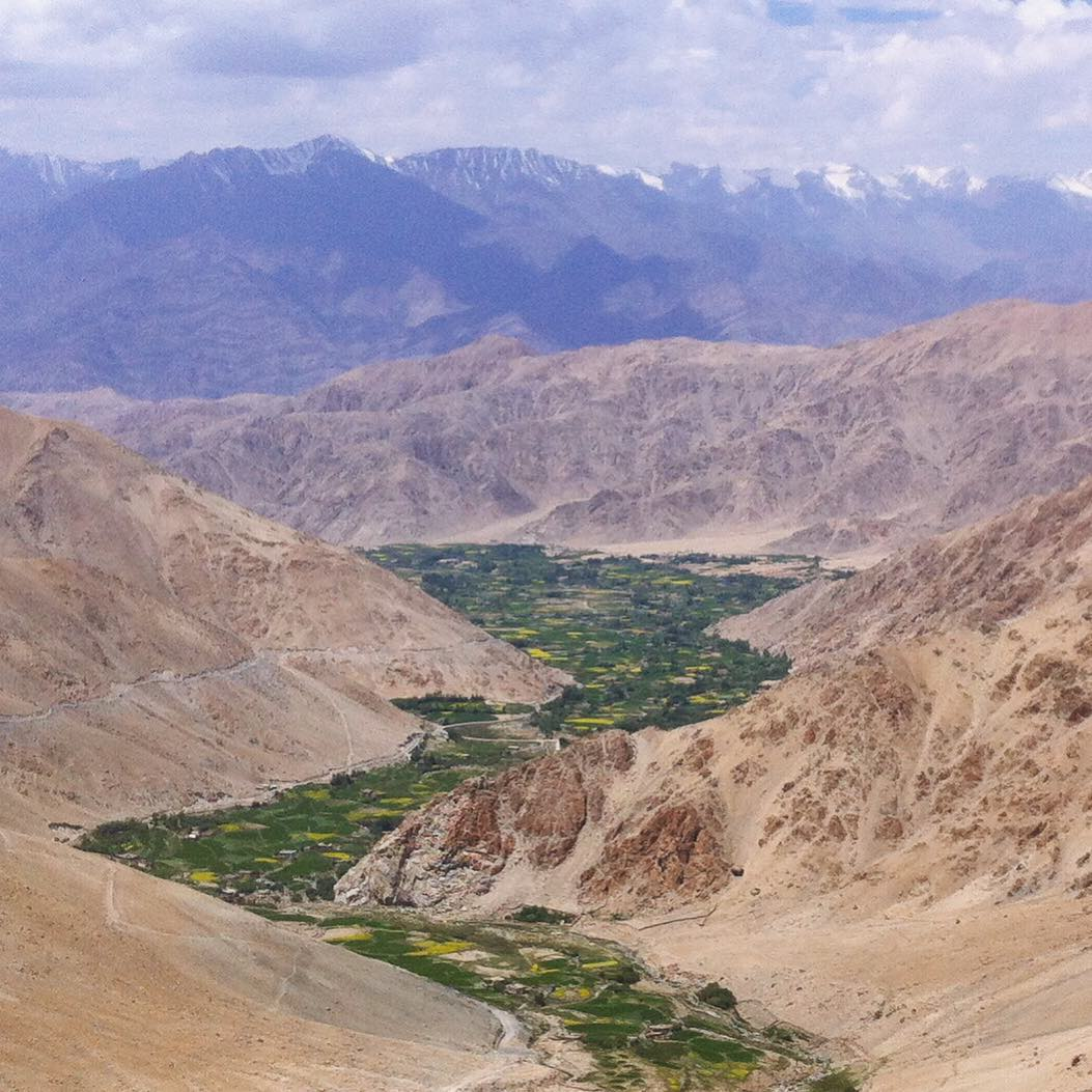 Rivers of green in Ladakh.