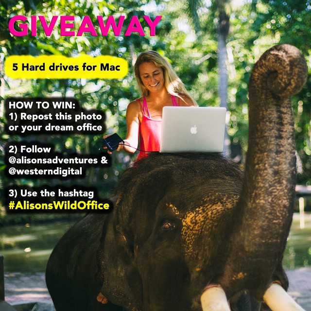 DAY 4 of #AlisonsWildOffice #giveaway  WIN A WESTERN DIGITAL HARD DRIVE EVERY DAY THIS THIS WEEK!  HOW TO WIN: 1) Repost this photo or a photo of your dream office  2) Follow @alisonsadventures and @westerndigital  3) Use the hashtag #AlisonsWildOffice...