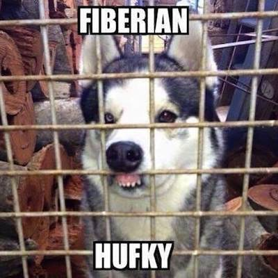 Many of my friends have sent me this meme recently - because obviously - I have two huskies. I still laugh every time. #fiberianhufky #yufidadeftroyer #bentryfickenfingersbfrock