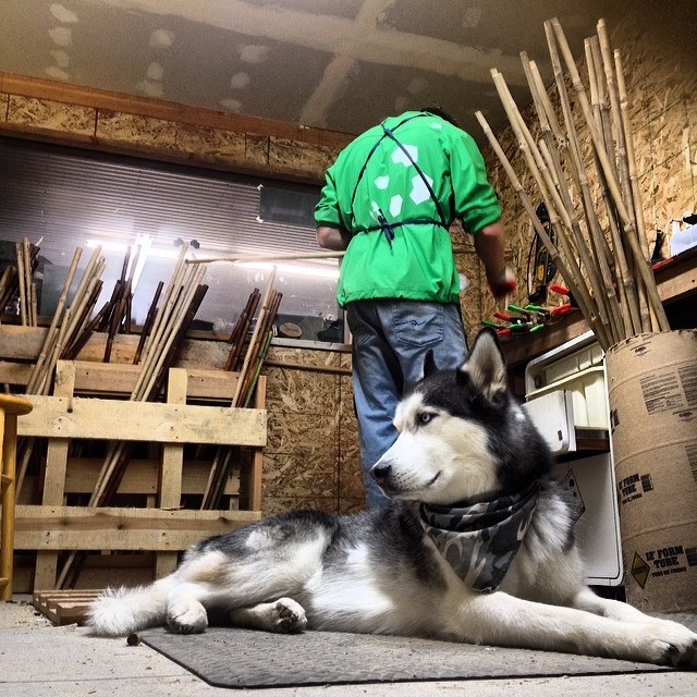 Kody & Kash hold down the fort in the #pandaworkshop... #pandapoles #shopdog #handcrafted #smallbatch #bamboo #magicskiwands #madewithlove @kirkg8