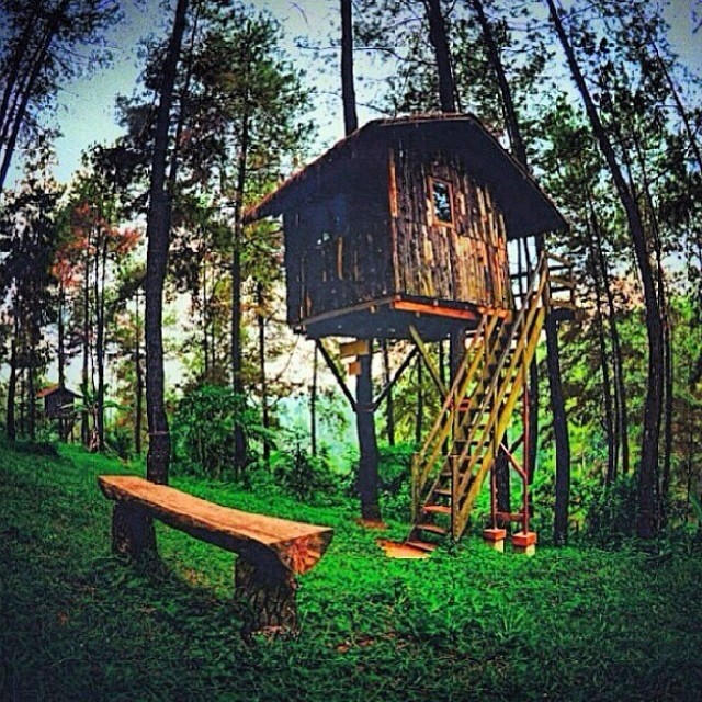 #Treehouse Thursdays. Got to get away to this place . #TreeFort #LiveOutside @treefortlifestyles