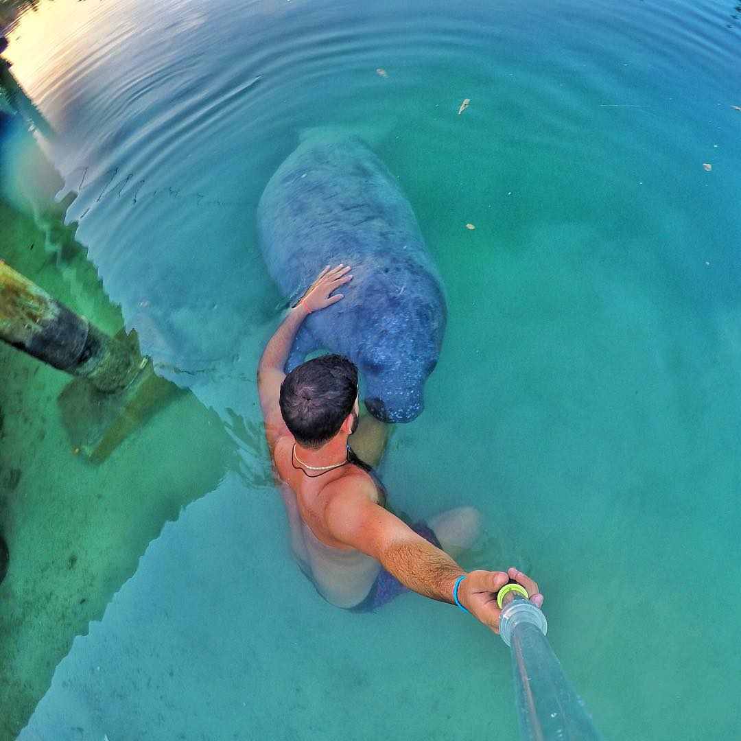 Manatee visit in the Bahamas. Photo: @miaoulis17 GoPro HERO4 | GoPole Evo #gopro #gopole #gopoleevo #manatee #bahamas
