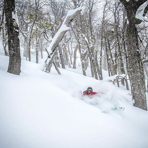 Flylow's @tj_skis doing his thang down in Bosque, Argentia. PC: Jared Akerstrom. #headsouthforthewinter #treeskiing #southoftheborder  #embracethestorm | #flylowgear