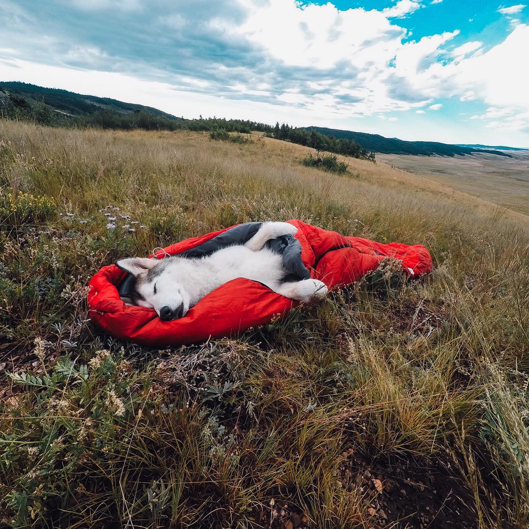 Photo of the Day! To celebrate #nationaldogday, here's the adorable @loki_the_wolfdog all wrapped up like a sleeping burrito. Share your best dog moments with us by clicking the link in our profile. #nationaldogday #gopro