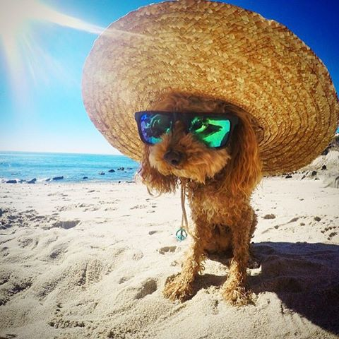 Beach days and good rays for #NationalDogDay!  @_cliffstagram @melissa_marquardt #SEEHAPPY