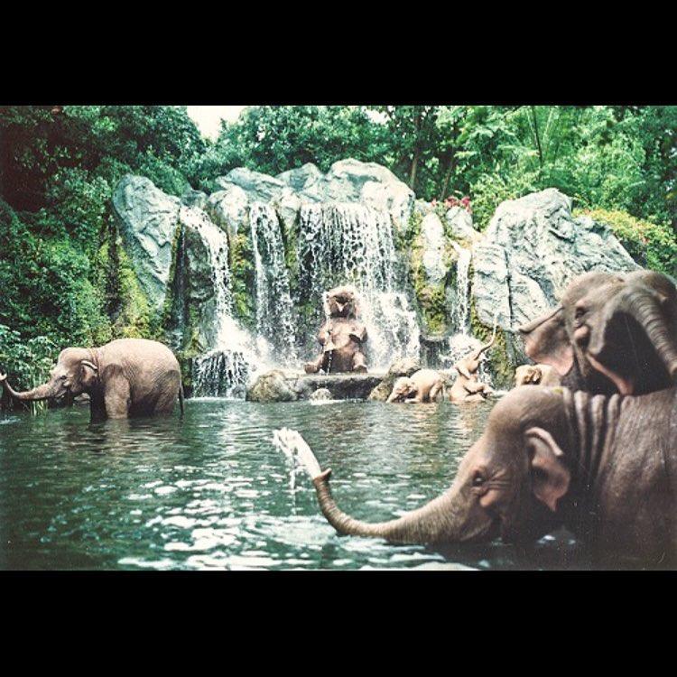 Jueves con amigos! #jointheherd #elephant #elefante #unitealamanada #amigos #buenavida