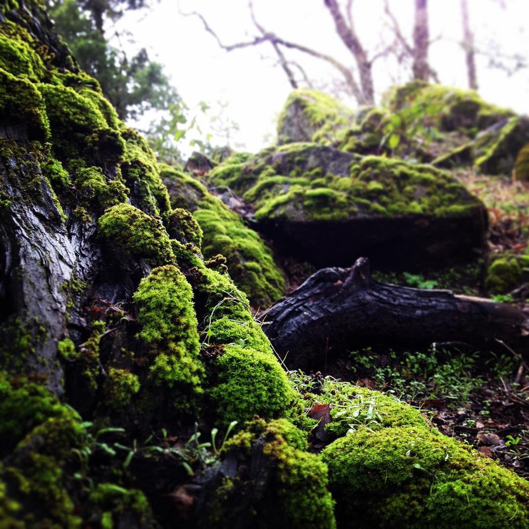 El bosque en pleno invierno se mantiene vivo