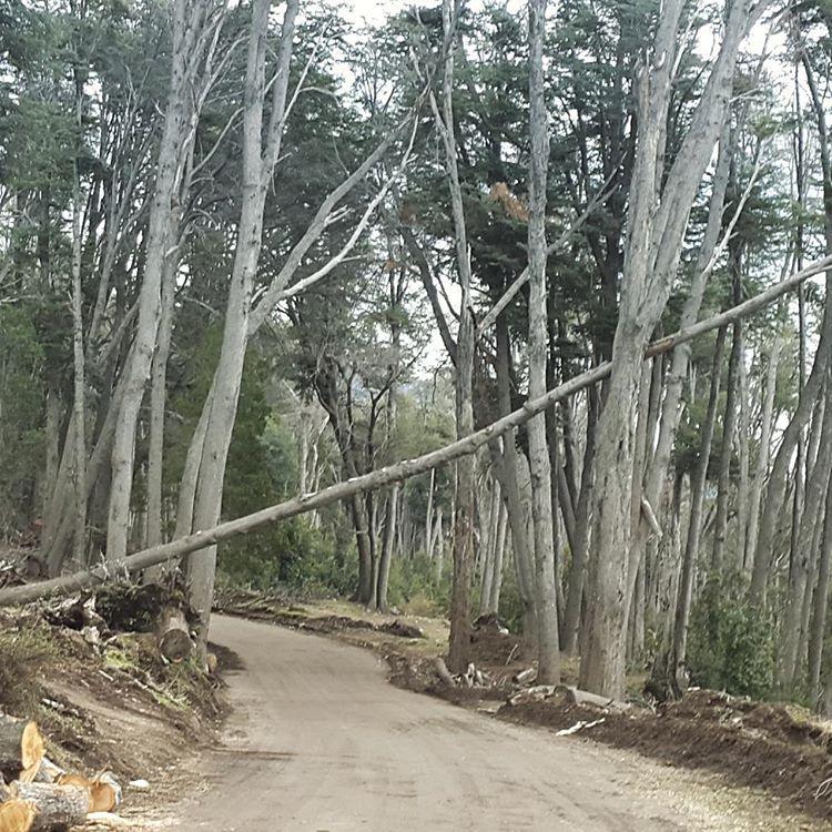Fueeraaaabajooooo! Trayecto del camino para llegar a villa traful.  #fuerabajo #villatraful #madera #arboles #camino #surargentino #argentina #argentinaig #ig_argentina #ig_latinoamerica_ #onlyinsouthamerica #bosque #igs_photos #estaes_america...