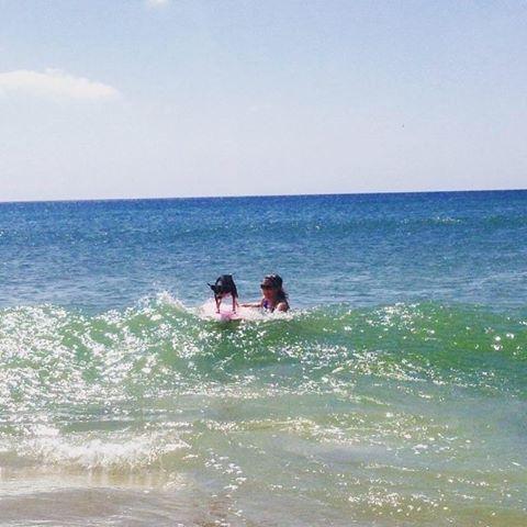 #miolagirls teach their dogs to surf