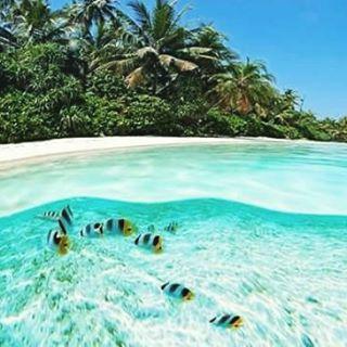 Las Islas Maldivas, se sientan en el Océano Índico y se componen de veintiséis atolones. Estos atolones están repartidos en aproximadamente 90.000 kilómetros cuadrados (35.000 millas cuadradas), convirtiendo al país en uno de los más dispersos...