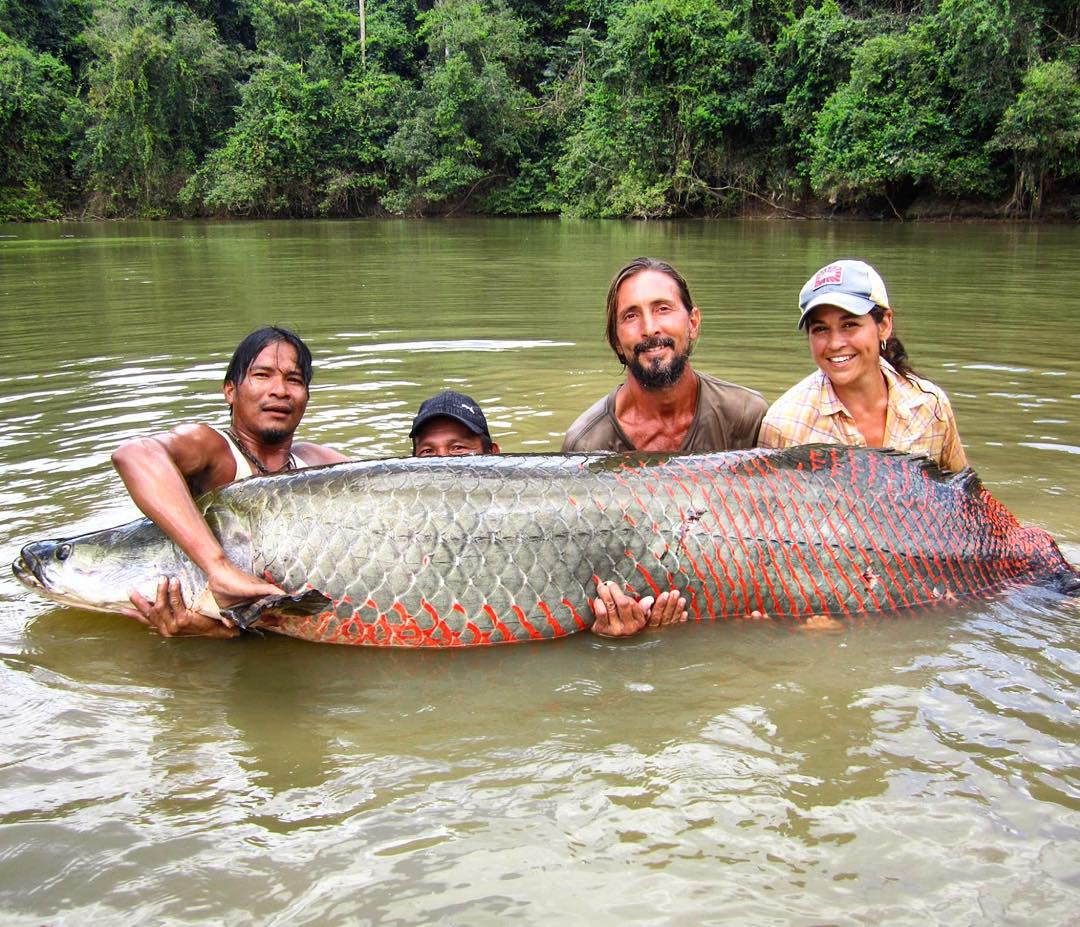 Adventurer @lesleydesouza is in #Guyana studying arapaima in remote villages, while also collecting samples for ‪#ASCMicroplastics‬. These are among the world's most enormous freshwater fish, growing up to 15 ft long!  Here's Lesley with the largest...