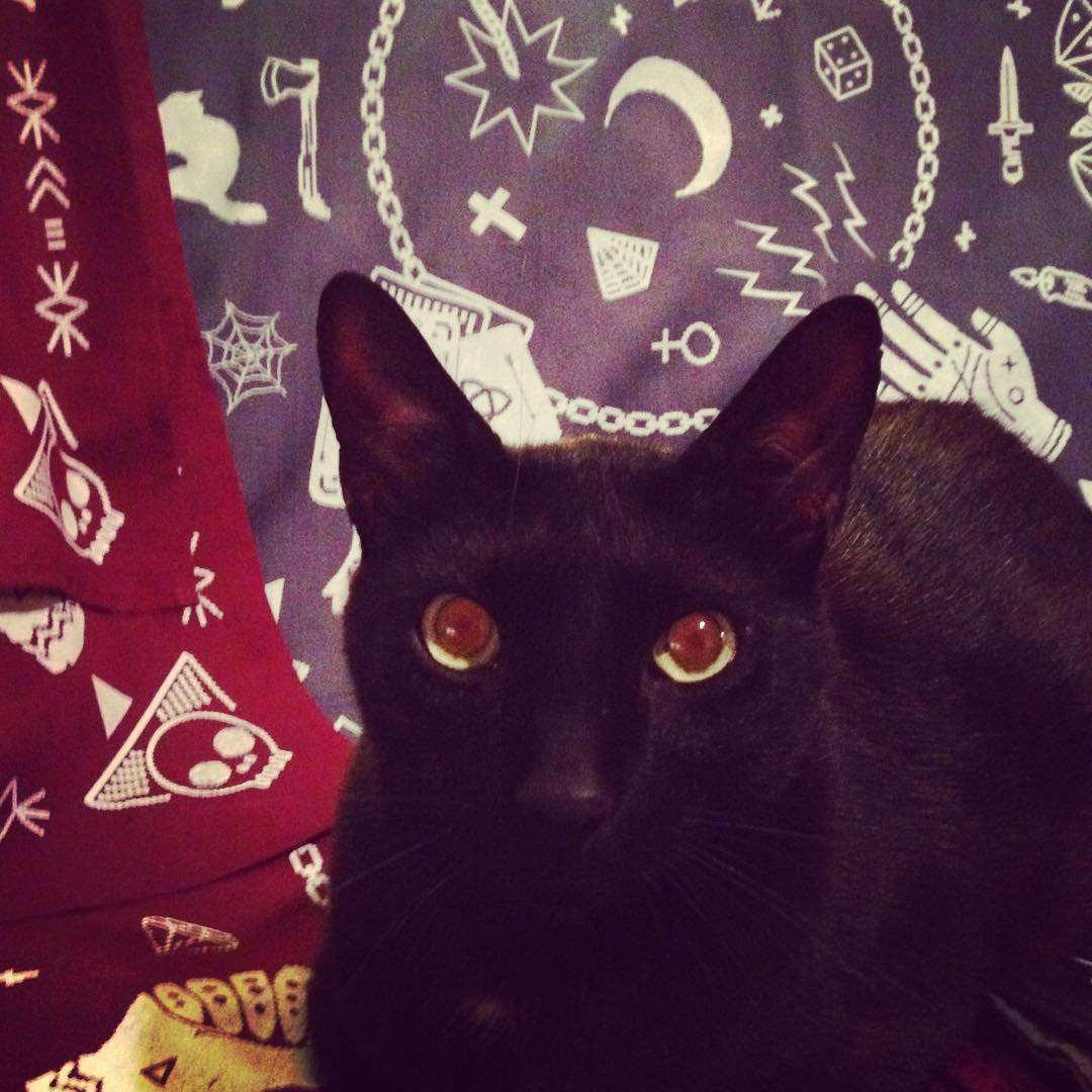 Nuestro guardián de bandanas pixel M A G I C #bandanas #pixel #cat #black #design #magic #stamp