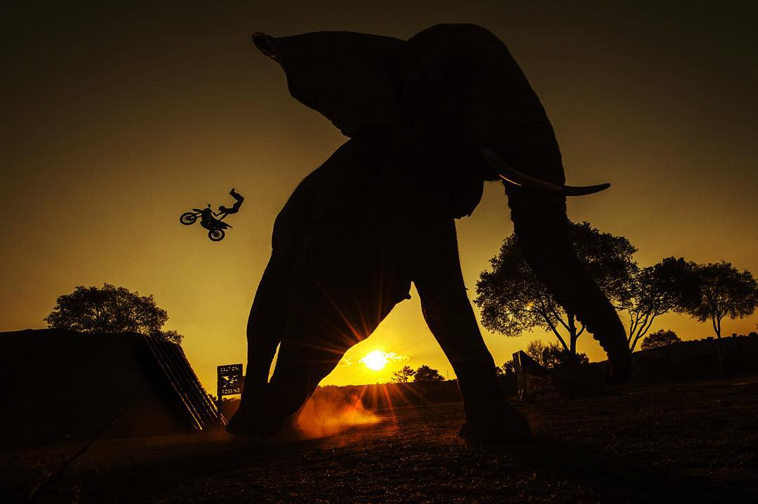 Sunset sessions; the x-fighter and the elephant.