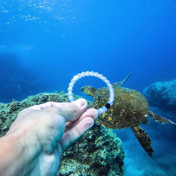 Coming out of our shell #livelokai Thanks @nainoalanger