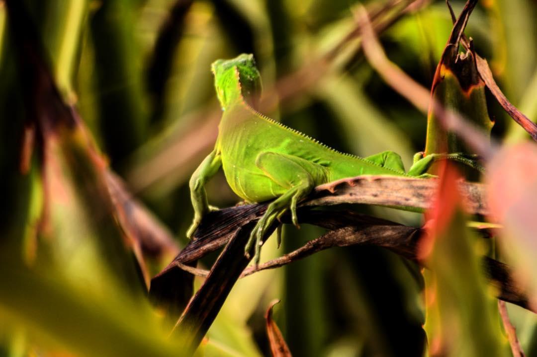 En el continente mexicano nos encontramos con una vegetación totalmente diferente. Y, con ella, a nuestro amigo Diego #HitTheWave #SeekTheExeperience