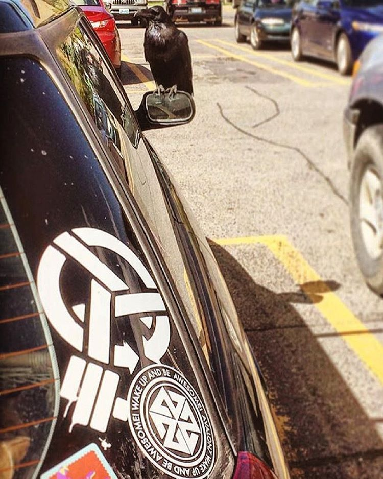 The Raven knows. Sticker game strong! @avalon7 @asymbol @4frnt_skis  photo by adventurer @brit_sunshine #avalon7 #liveactivated www.avalon7.co