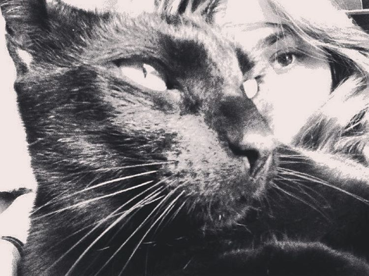 Tinto #cat #black #gato #amorgatuno #gatonegro