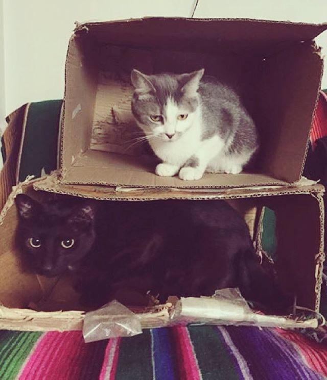 Torre de Miaus ⤵️Tinto ⤴️Soda @tintoysoda #amorgatuno #cat #gato #miau #purrr