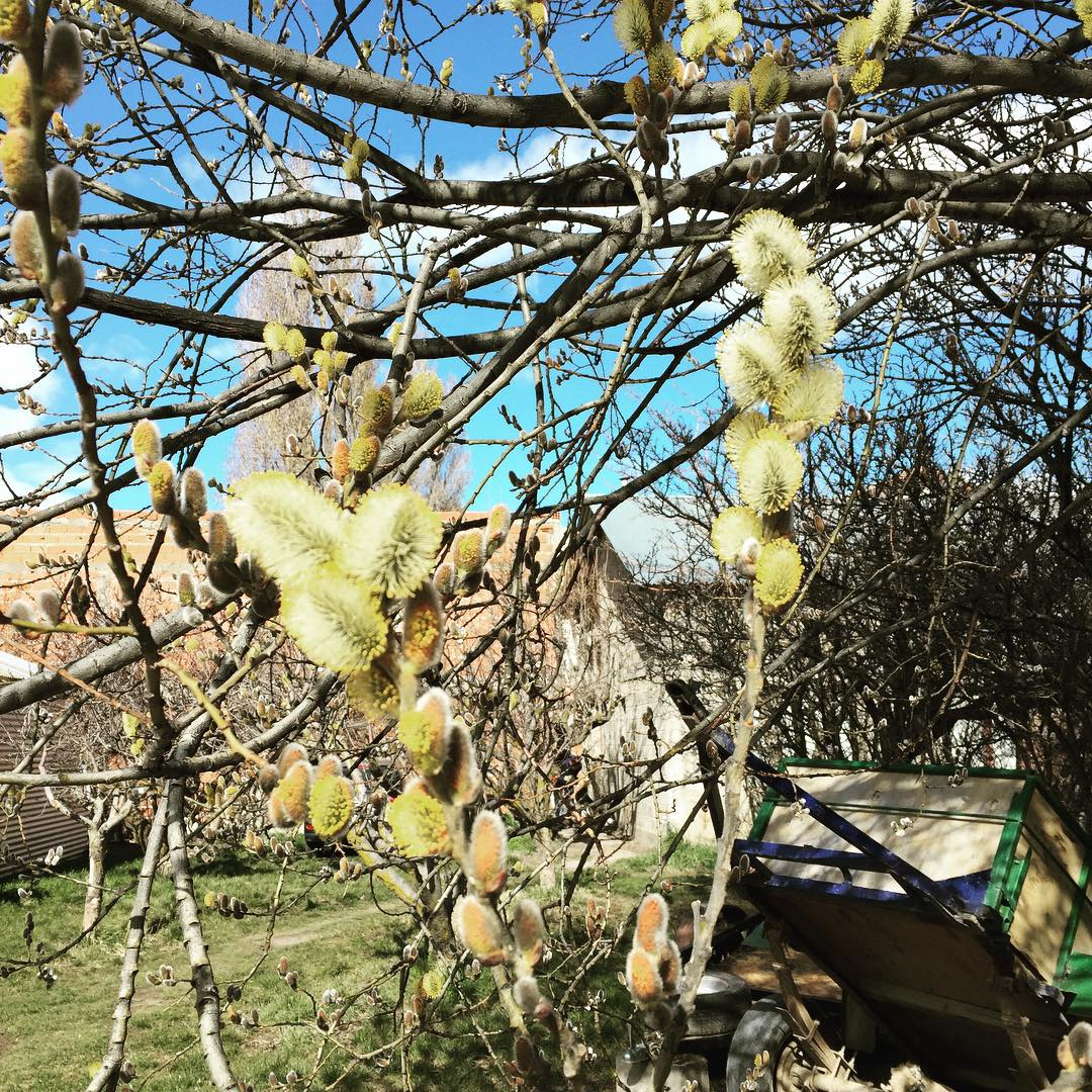 Se florece donde se elige #florecequenoespoco #patagonia #trippingmood