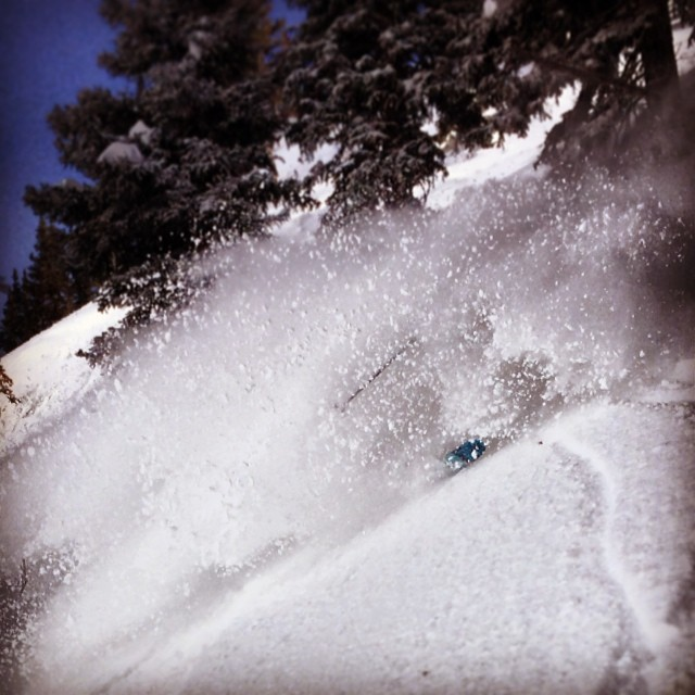 Where did @bo_bot go?!?!?! Fun morning getting pitted at @snowbird #kittenfactory