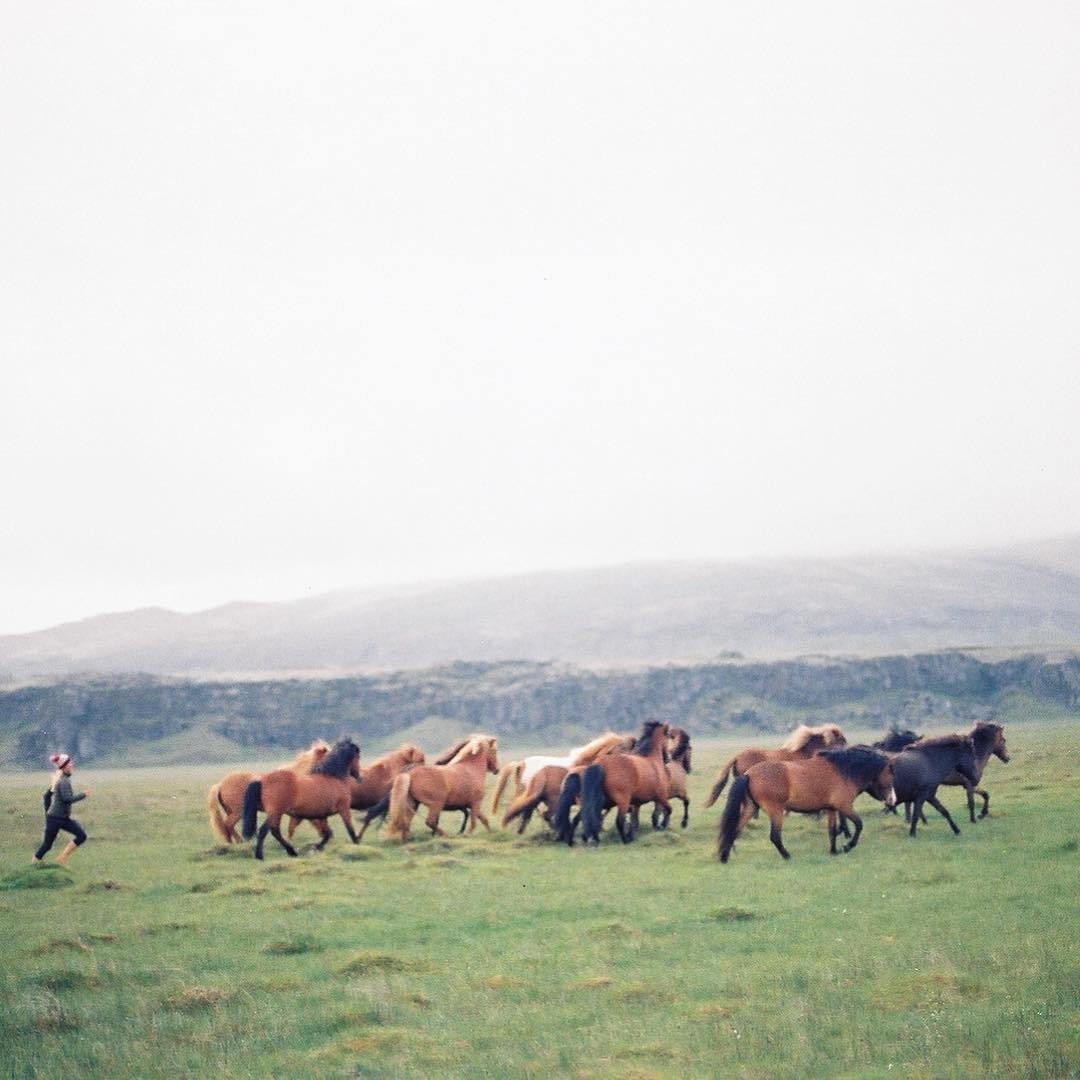 Running down the herd. Shot by @chaddkonig