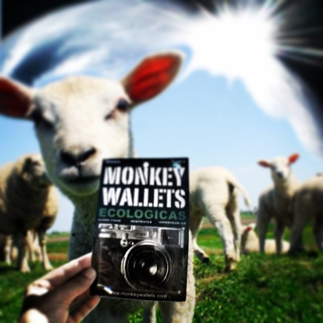 We love Animals!! #monkeywallets @monkeywallets #love #animals