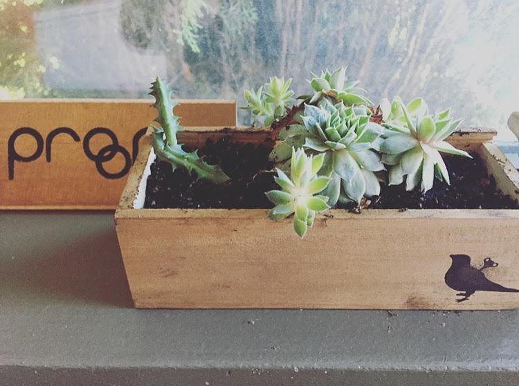 Did we mention? Free succulent planter with every purchase!  Creative inspiration from @sarah_diamond13 - what do you use our boxes for?