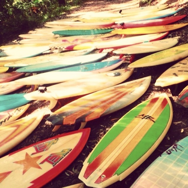 Surfboard landscaping? Very cool!! #localhoney #art #love #travel #adventure #hawaii #coastal #surfboards #surfing #suplandscapingisnext #bikinis #summer #sunshine #getoutandplay