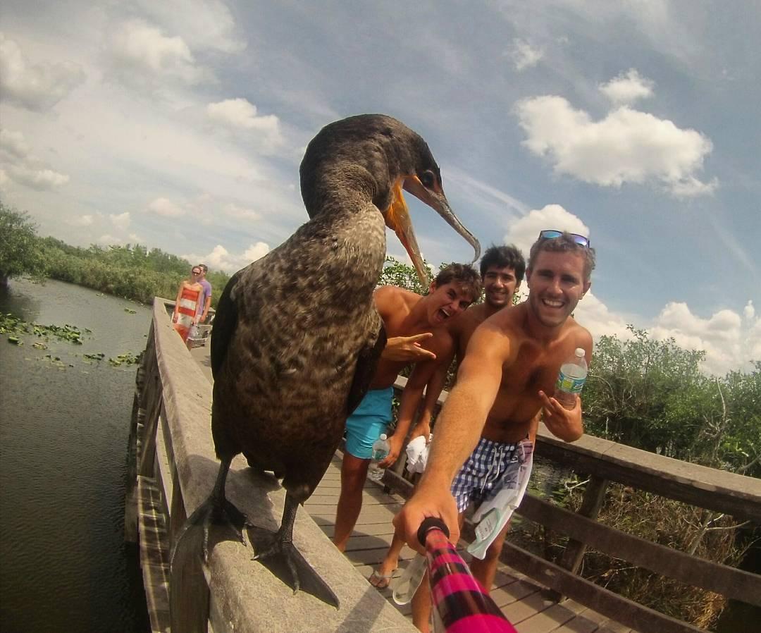 @nachomielke con su #ZephyrPole desde #EvergladesNationalPark #USA !!