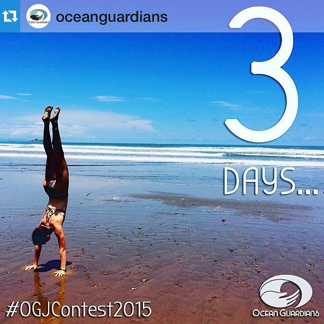 What an exciting day! But we can't forget to remind everyone that there are 3 DAYS LEFT before we open the gates to the #OGJContest2015!!! Win the grand prize and then come chill with the growing Bodhi team in 2016, learn to #surf, perfect your #yoga...