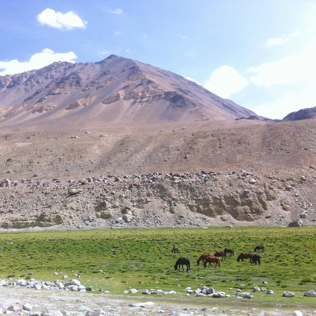 Wild horses in Ladakh, spotted on a motorcycle trip to meet with our weavers in North India.