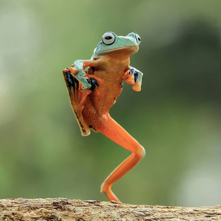 Time to let loose and do a happy dance... it's #Friday!