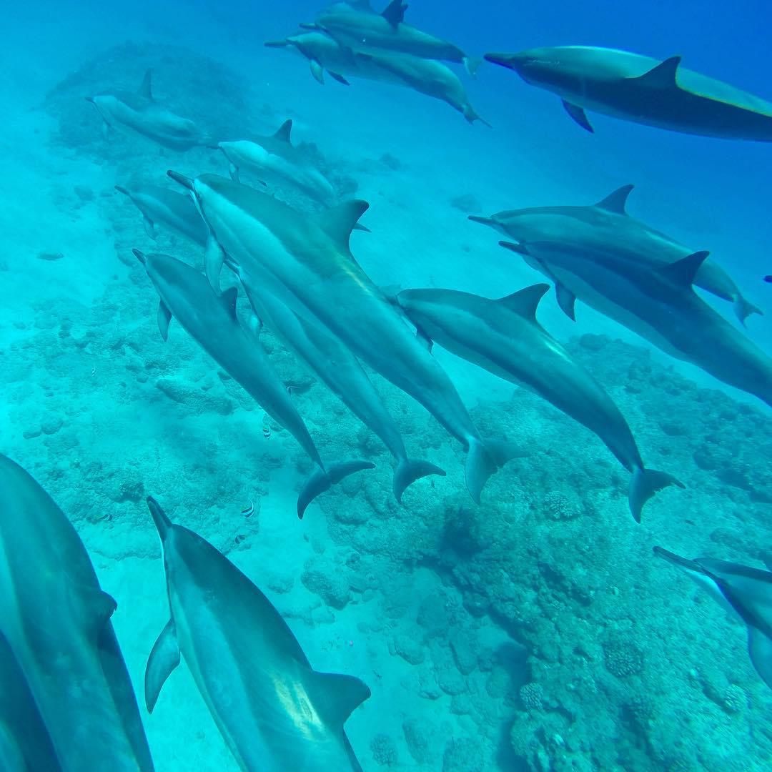 Photo: @claucoxrfavela Location: Hawaii GoPro HERO4 | GoPole Evo #gopro #gopole #gopoleevo #dolphins #hawaii