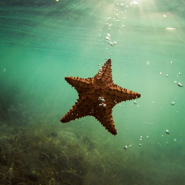 Spending time in Hollyweird lately everyone wants to be a star...I think I'd rather be a starfish...what about you? ⭐️